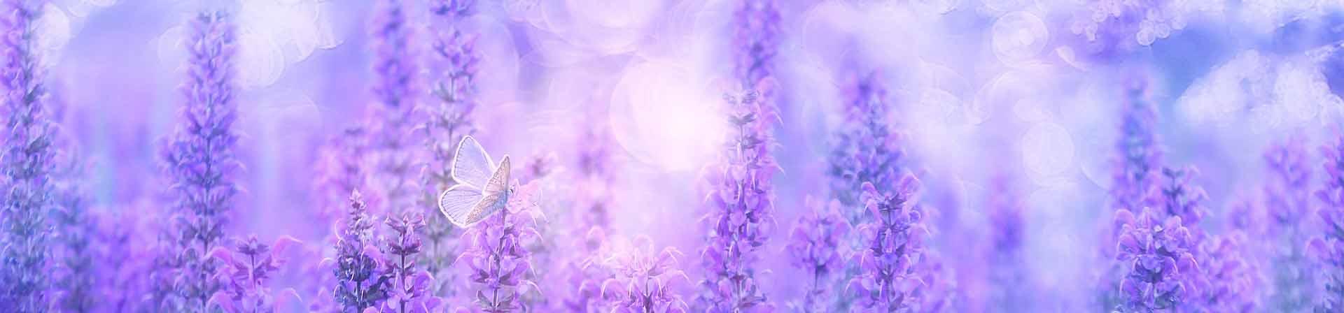 violet-3054851_1920x448