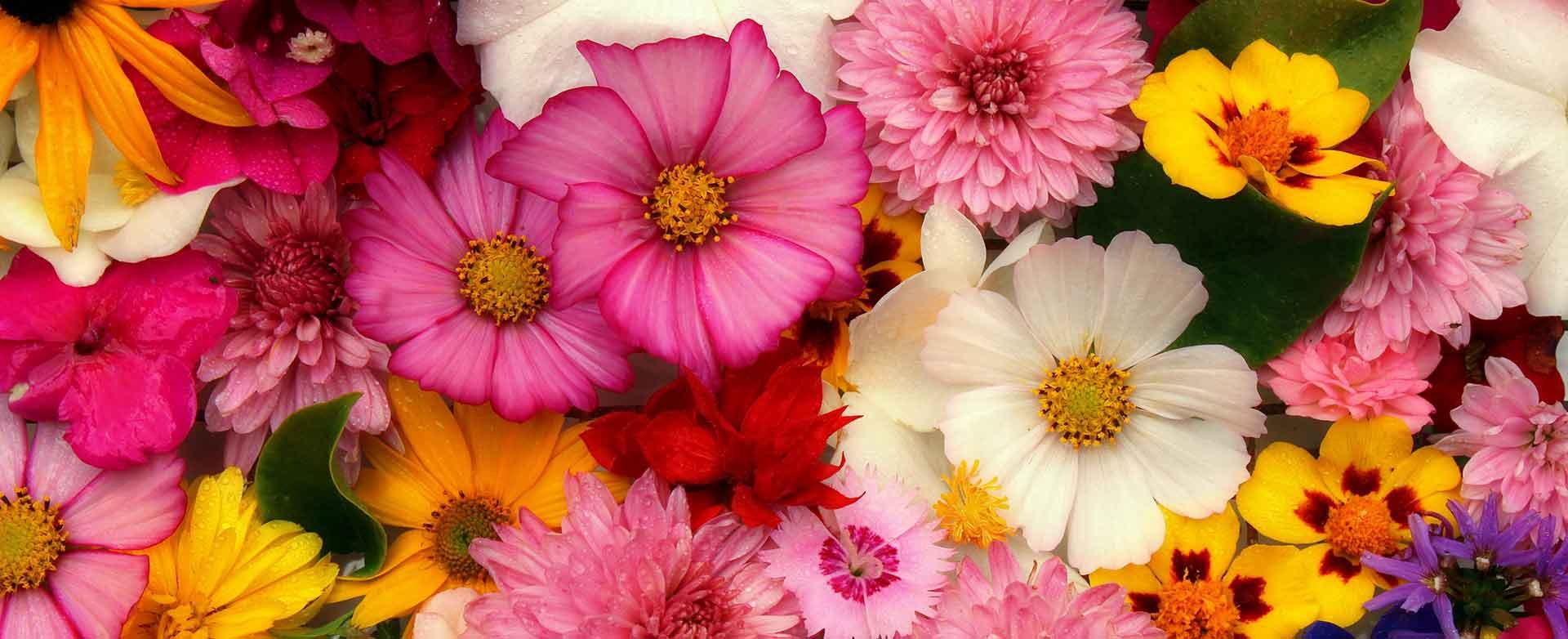 flowers-3644676@1920x782